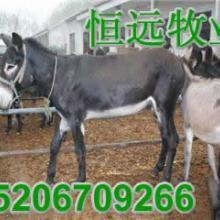 供应江西九江肉牛养殖基地南昌肉羊养殖基地萍乡肉驴养殖基地批发