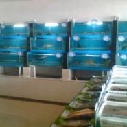 南通酒店海鲜鱼缸制作价格亚克力图片