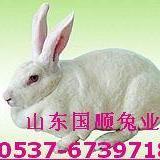 供应兔子最近的价格