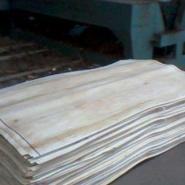 杨树皮子图片