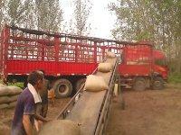 供应花生秧草粉,花生壳粉,小麦秸秆批发
