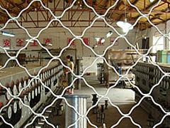 东北美格网大型美格网焊接美格网图片
