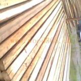 供应建筑用杉木杆