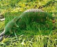 科技生态养蛇-穿山甲种苗厂商批发图片