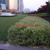 供应重庆绿化养护公司—重庆园林养护公司报价—重庆园林绿化施工公司