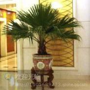 会议场所植物绿化方案图片