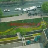 供应重庆市政绿化,重庆专业绿化养护公司,重庆大型园林养护服务