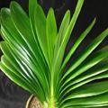 上海植物租摆热线图片