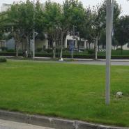 供应重庆绿化工程—重庆绿化公司有几家—园林绿化工程如何报价