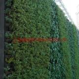 供应绿化工程养护—上海立体绿化工程报价—上海植物墙工程施工