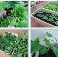 栽培基质花盆容器