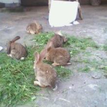 供应野兔肉兔