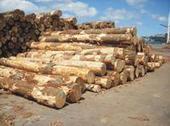 供应北美木材进口报关代理图片