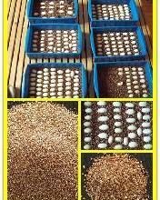 供应三宝孵化龟鳖蛭石