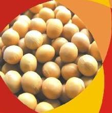 供应磷脂酰丝氨酸