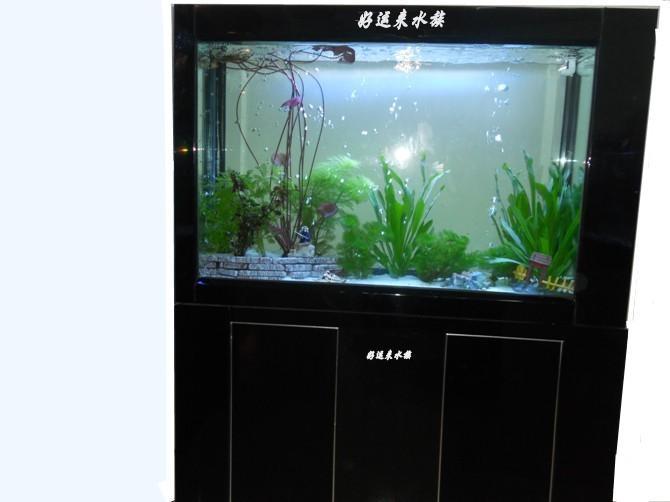 生态免换水鱼缸图片/生态免换水鱼缸样板图图片