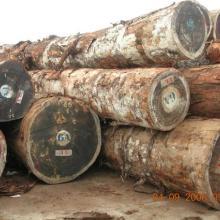 欧洲木材进口清关代理图片