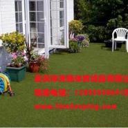 供应双桥区便宜的人造草坪,重庆人造草坪厂家直销,重庆南岸区销售塑料户外人造草坪