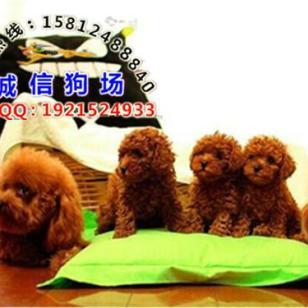 广州哪里有养狗场繁殖基地图片
