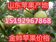 供应金帅苹果/金帅苹果价格批发