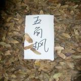 江苏沭阳阳光花卉种苗基地品质保证的种子店五角槭种子色木种子五角枫种子