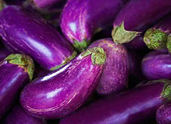 供应深圳蔬菜配送新鲜蔬菜配送