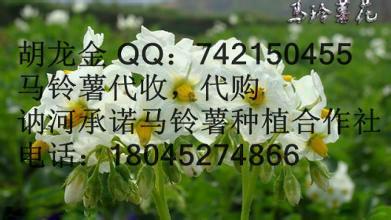 黑龙江土豆