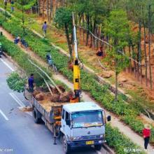 供应南京园林绿化工程,承包园林绿化工程,园林绿化工程