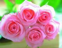 鲜切花图片/鲜切花样板图 (1)