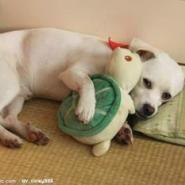 狗狗玩具图片