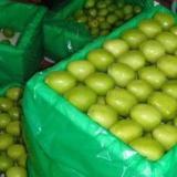 供应代销木瓜