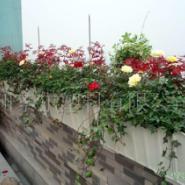 阳台绿化多少钱图片