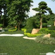 上海别墅花园绿化施工图片