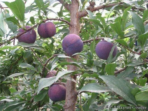 供应各种生鲜水果