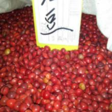 供应红豆杉种子,红豆杉种子批发,红豆杉种子价格图片