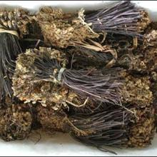 供应优质蕨菜