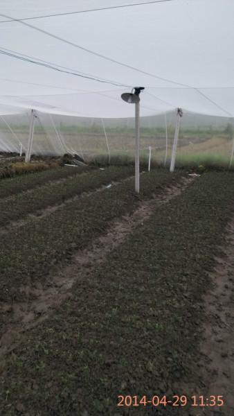 供应无菌网棚柑桔苗订育