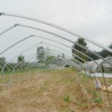 供应农业蔬菜大棚建设造价图片