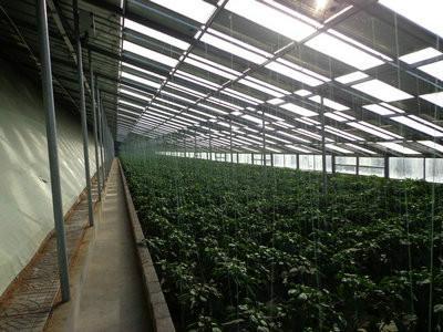 供应天津新式冬暖式蔬菜大棚骨架图片