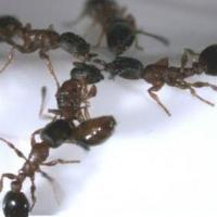 供应装修白蚁防治、装修预防白蚁、眉山白蚁防治公司 装修白蚁防治批发