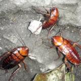 供应装修白蚁防治、装修白蚁预防、广汉白蚁防治公司