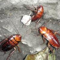 供应装修怎么预防白蚁、装修怎么白蚁防治、眉山白蚁防治公司