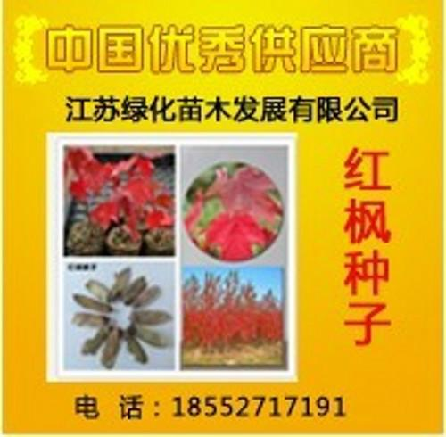 供应日本红枫种子图片