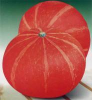 红蜜南瓜种子图片/红蜜南瓜种子样板图 (1)