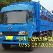 东莞到沧州家禽动物物流运输图片