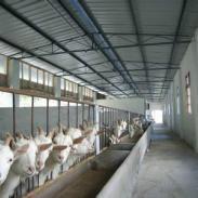 波尔山羊价格是多少图片