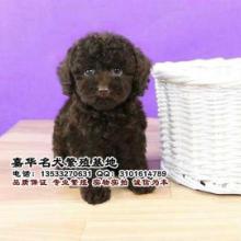 广州哪里有卖泰迪熊 泰迪熊一只多少钱