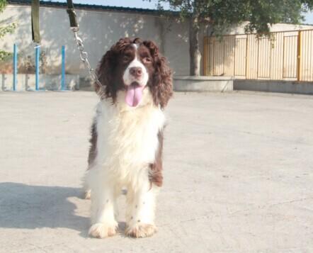 宠物值得信赖:宠物出售,宠物培训价位宠物漻