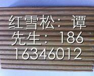 山东红雪松板材批发价格图片