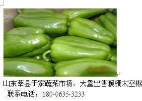 广东太空椒厂家直销 太空椒报价 太空椒供应商 太空椒厂家